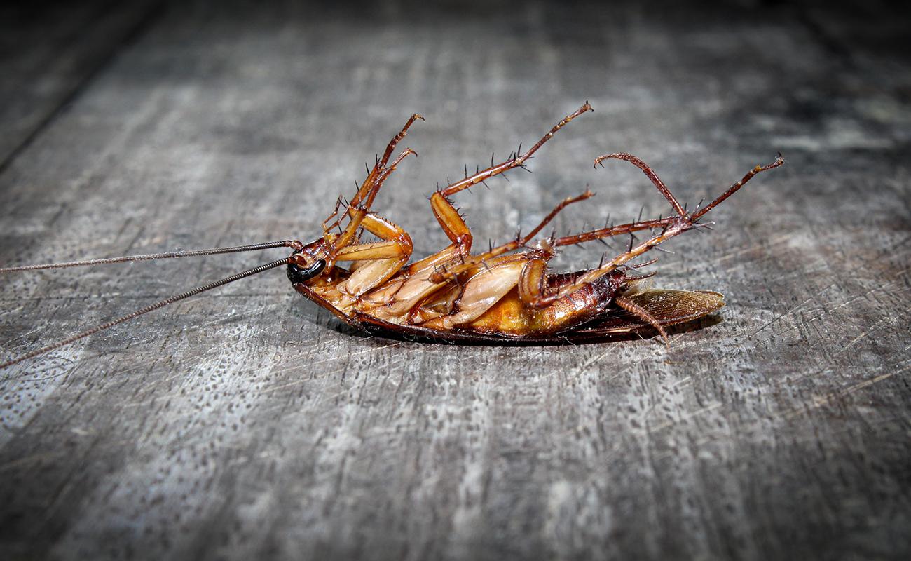 control de plagas de cucarachas en Valladolid