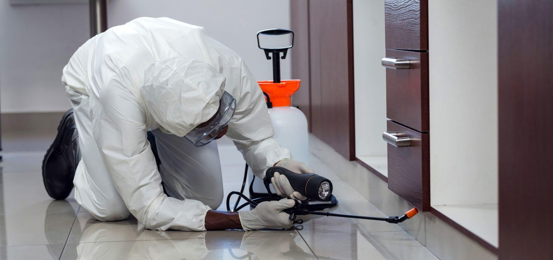 desinfección plagas profesional Valladolid